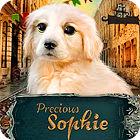 Precious Sophie gra